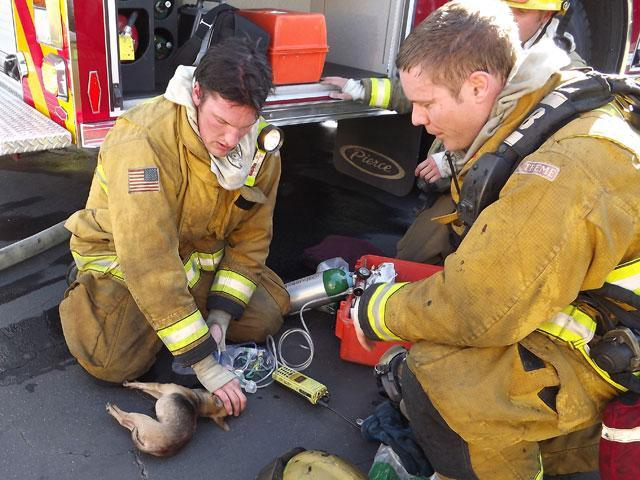 lynnwood mobile home park with El Cajon Paramedics Revive Dog Rescued From Fire on 27773852 in addition El Cajon Paramedics Revive Dog Rescued From Fire as well 27775562 additionally 2876425 further Actualmente Parecen Llegar Con Mas.