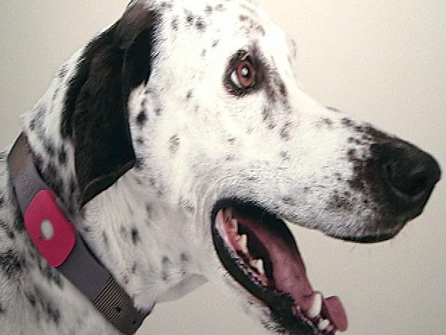 New Device Tracks Pets Using Gps Technology 10news Com