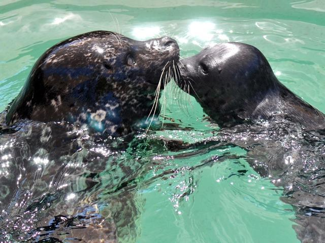 Harbor Seals Adult Baby 25328860 226162 ver1.0 640 480 The Villages Florida   Active Adult Communities in Florida | 55 Places