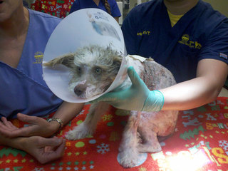 Injured dog Chula Vista Nov. 21, 2012