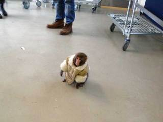 Monkey at Ikea store