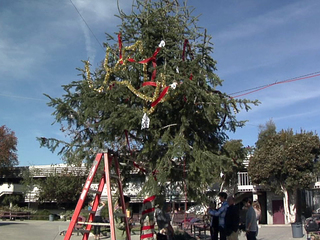 Christmas tree prank Point Loma High School