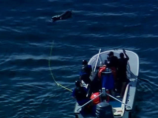 Dolphin rescue La Jolla Cove Feb. 15, 2013