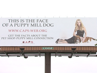 CAPS_puppy_mill_sign_1367390037588.jpg