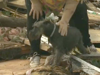 WATCH: Dog found alive in tornado rubble