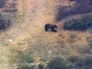 Bear spotted roaming LA neighborhood