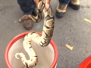 Man finds snake in dumpster