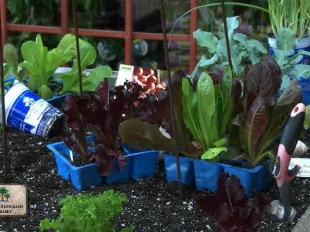 Garden Talk: Planter veggies