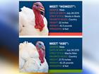 Obama pardons 2 turkeys before Thanksgiving
