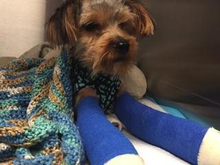 Puppy badly injured during adoption interview