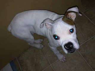 Puppy missing after running from car accident