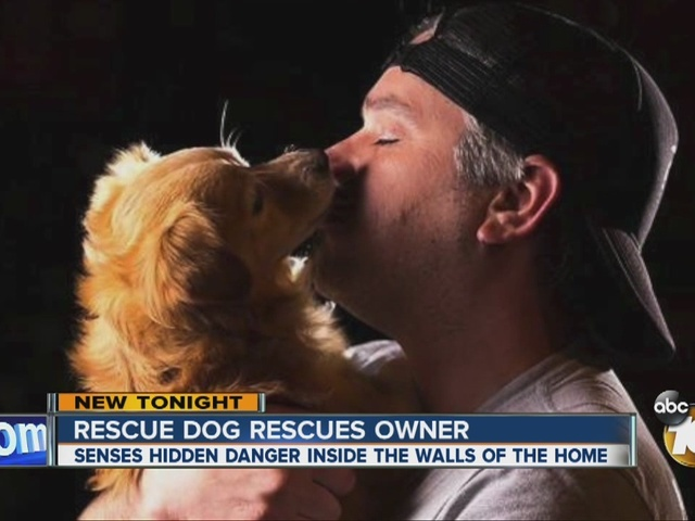 Rescue dog rescues owner
