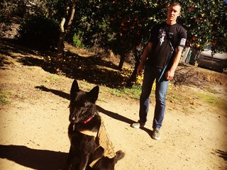 Wounded warriors and their 'Battle Buddy' dogs
