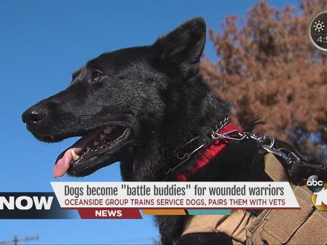 Dogs become 'battle buddies' for wounded warriors