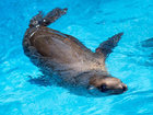 Sea lion found at restaurant returned to ocean