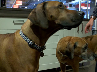 Local business counts dogs as co-workers
