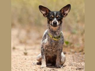 Pet of the Week: Amberlee