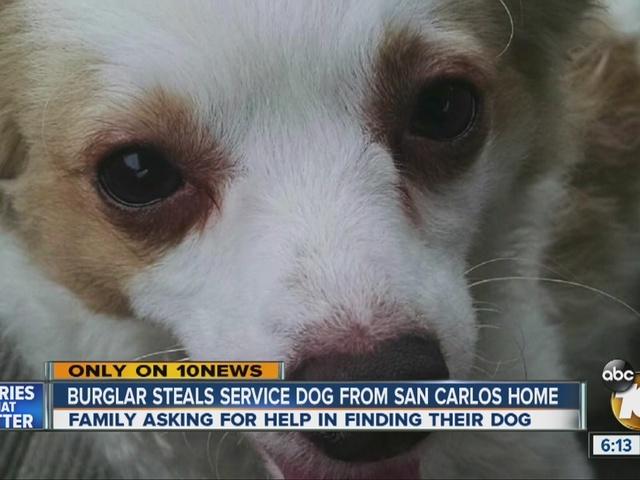 Service dog stolen in San Carlos home burglary