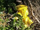 Safety issue? Fire hydrant covered by brush