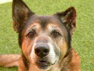 Pet of the Week: Rico