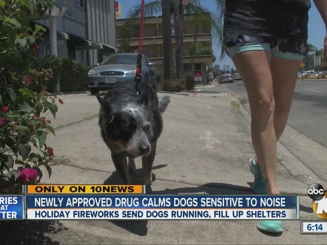 Drug calms dogs amid the noise of fireworks