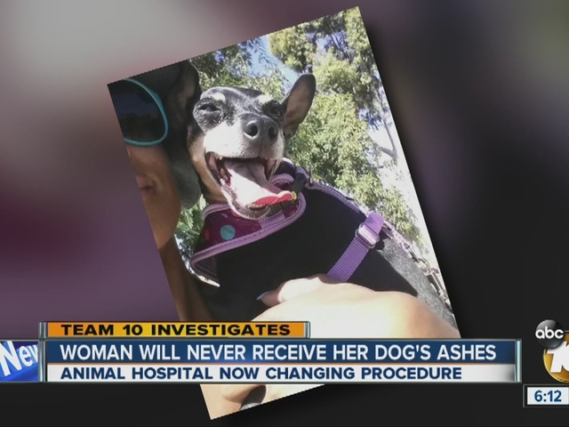 Team 10: Woman will never receive her dog's ashes