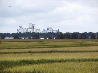 Flooding in South puts a damper on rice harvest