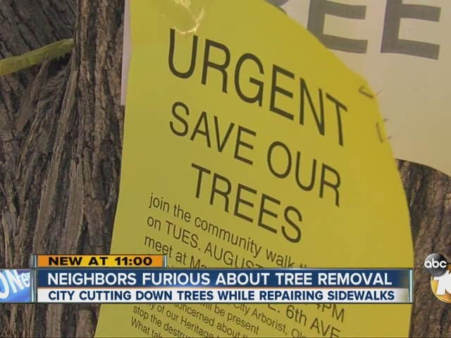 Neighbors furious about tree removal in Escondido