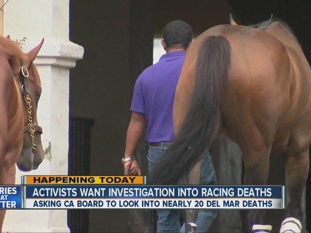 Activists pressure state to investigate spike in Del Mar horse racing deaths