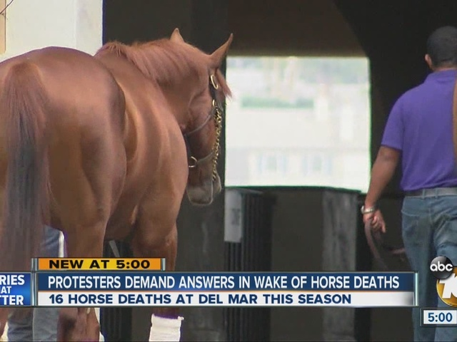 Answers sought in wake of multiple horse deaths at Del Mar