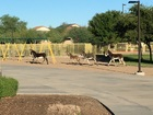 Burros roam onto Phoenix-area school
