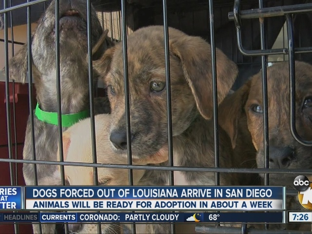 Dogs forced out of Louisiana arrive in San Diego