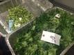 FAST FACTS: Prop. 64, legalizing marijuana