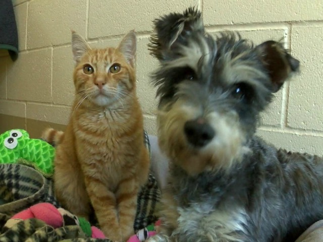 Animal Odd Couple Romeo The Cat And Juliet The Dog In Need