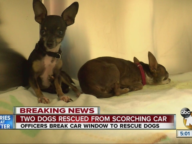 Two dogs rescued from scorching car