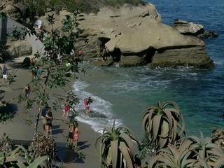 Lifeguards falling ill at La Jolla Cove