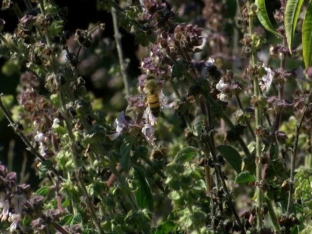 San Diegan Creates Shelter To Save Native Bees 10news