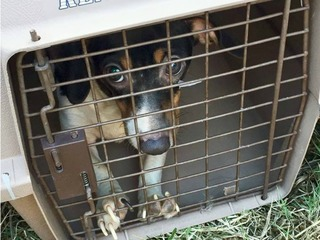 78 dogs rescued from East County home