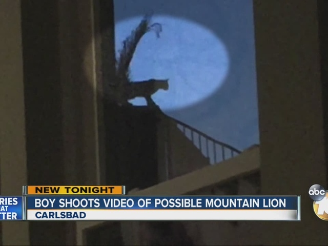 Boy shoots video of possible mountain lion