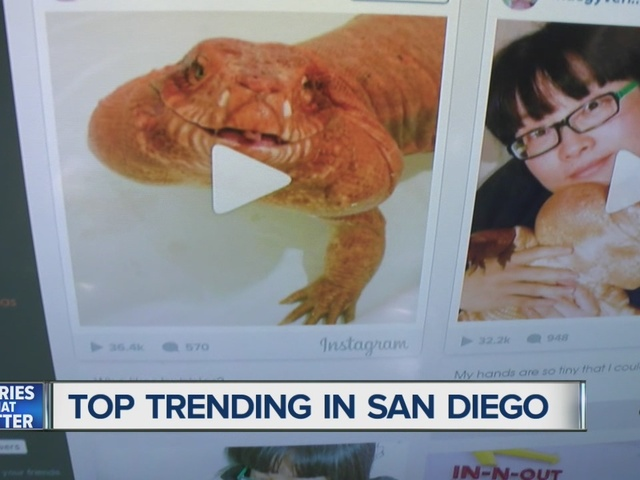 San Diegan couple's pet lizard is a viral sensation