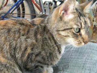 Woman searching for cat targeted by scammers
