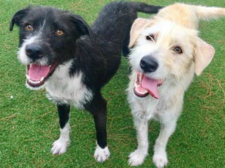 Pet of the Week: Nicole and Ringo