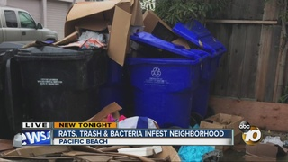 Rats, trash, bacteria infest PB neighborhood