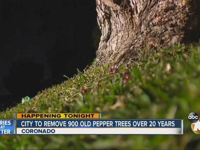 City to removed 900 pepper trees over 20 years