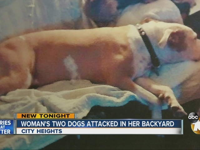 Woman's two dogs attacked in her backyard