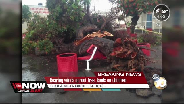 Roaring winds uproot tree- lands on children
