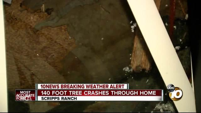 140 foot tree crashes through home