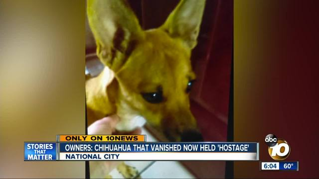 Owners- Chihuahua that vanished now held -hostage-