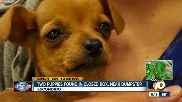 Two puppies found in closed box near dumpster