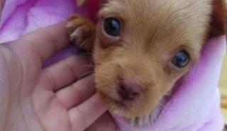 Puppies left in the rain near Escondido dumpster
